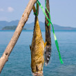 Dried fish near the sea in Thailand — Foto Stock