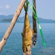 Dried fish near the sea in Thailand — Stock Photo