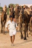 普什卡博览会 (普虚卡骆驼 mela) 拉贾斯坦邦印度 — 图库照片