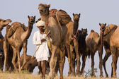Pushkar Fair ( Pushkar Camel Mela ) Rajasthan, India — Stock fotografie