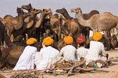 PUSHKAR, INDIA - NOVEMBER 20: Pushkar Camel Mela (Pushkar Camel Fair) on November 20, 2012 in Pushkar, Rajasthan, India. This fair is the largest camel trading fair in the world. — Stock Photo