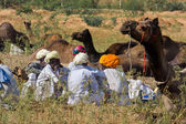 PUSHKAR, INDIA - NOVEMBER 18: Pushkar Camel Mela (Pushkar Camel Fair) on November 18, 2012 in Pushkar, Rajasthan, India. This fair is the largest camel trading fair in the world. — Stock Photo