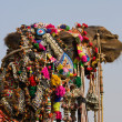 Camel at Pushkar Fair in Rajasthan, India — Stock Photo #29188021