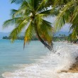 Foto Stock: Coconuts palm tree on beach