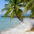 Coconuts palm tree on the beach — ストック写真