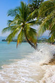 Coconuts palm tree on the beach — Stock Photo