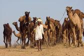 Pushkar foire/salon (chameaux de pushkar mela) rajasthan, inde — Photo