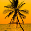 Foto de Stock  : Tropical sunset