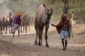 Pushkar Camel Mela ( Pushkar Camel Fair ) — Stock Photo