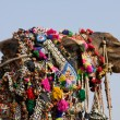 Camel dressed up for the trade fair. Pushkar, India — Stock Photo