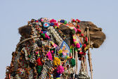 Camel dressed up for the trade fair. Pushkar, India — Foto Stock