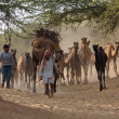 Stock Photo: Pushkar Camel Mel( Pushkar Camel Fair )