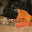 Buddhist monk with bengal tiger — Stock Photo #37890651