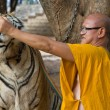 Buddhist monk with bengal tiger — Stock Photo #37890665