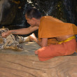 Buddhist monk with bengal tiger — Stock Photo #37890723