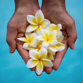 Frangipani flower in the hands of the girl near the pool — Stock Photo
