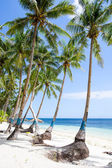 Coconut palm tree on the beach — Stock Photo