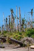 Island Malapascua — Stock Photo