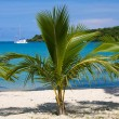 Beautiful palm tree over white sand beach. Summer nature view. — Stock Photo #47435413