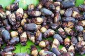 Fried beetles — Stock Photo