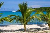 Beautiful palm tree over white sand beach. Summer nature view. — Stock Photo