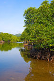 Mangrove forest in gulf of thailand — Stock Photo