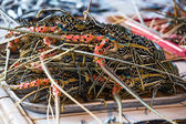 Selling fresh lobsters on the market in island Coron, Philippines. — Stock Photo
