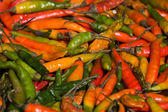 Background of closeup red and green hot peppers — Stock Photo