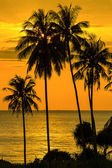 Palm tree silhouette at sunset, Thailand — Foto Stock