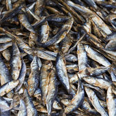 Dried fish on the market in Thailand  — Stock Photo