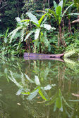 Lake in the jungle, Philippines — Stock Photo