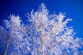 Tree in frost — Stock Photo