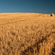 Farmland — Stock Photo #18139039