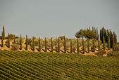 A typical landscape in Tuscany, Italy — Foto de Stock
