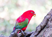 A couple of beautiful macaws — Stock Photo