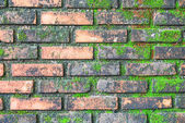 Brick wall full with green moss  — Stock Photo