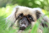 Surprised dog — Stock Photo