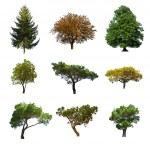 Summer trees — Stock Photo #15057229