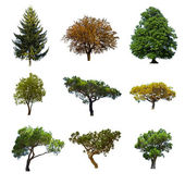 Summer trees — Stock Photo