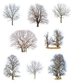 Collections of tree — Stock Photo