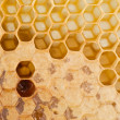 Full and empty honeycomb — Stock Photo