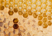 Full and empty honeycomb — Stockfoto