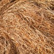 Hay texture — Stock Photo