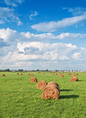Hay on green grass — Foto Stock