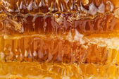 Honeycomb texture — Stockfoto