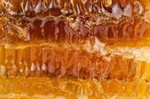 Honeycomb texture — Stock Photo