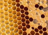 Tekstury o strukturze plastra miodu — Zdjęcie stockowe
