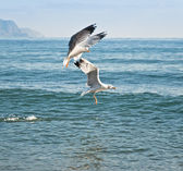 Seagull over water — Stock fotografie