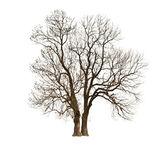 Automne bare tree — Stock Photo