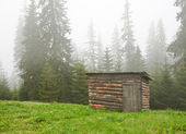 Cabin in the forest — Stock Photo